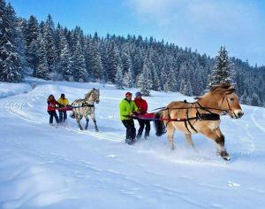 Ski avec cheval